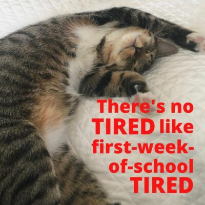 Tired Cat on First Week of School