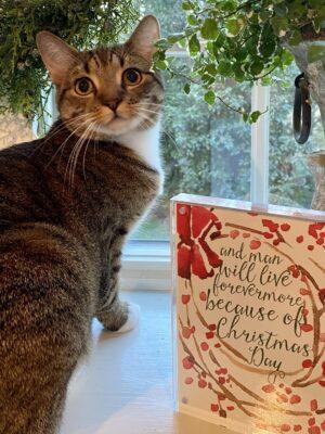 Quarantine Kitty with Christmas decor